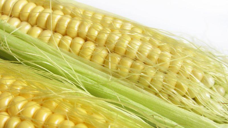 kukuruza pohidenia