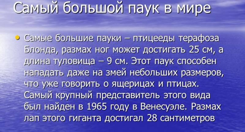 pauk bolshoy