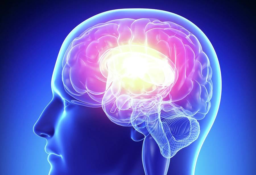 starenie mozga