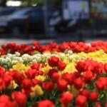 Где и как провести майские праздники?!