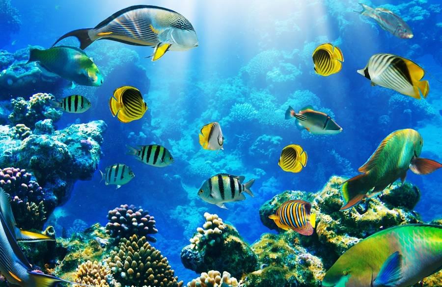 Egipet 2015 Krasnoe more