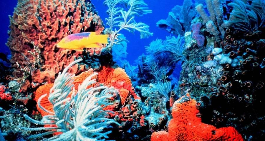 dayving bahamas