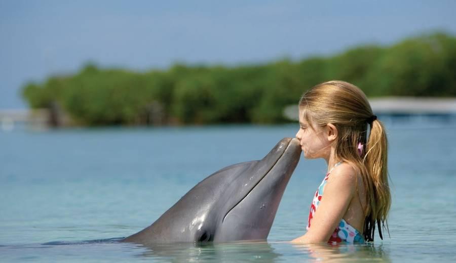 delfini na bagamas