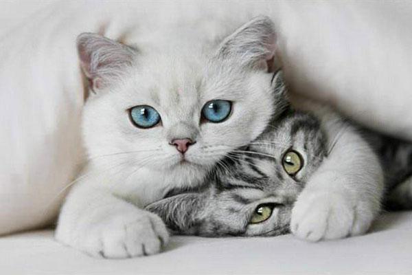Всё что нужно знать о кошках