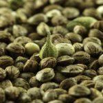 Энергетически полезный состав конопляных семечек