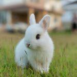 Кролики – это не только ценный мех