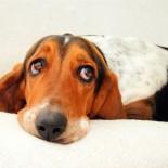 Стерилизация собак — для чего она нужна?